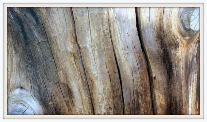 Dřevěný špalek stáří 50 let