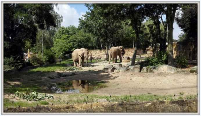 Sloni Dvůr Králové