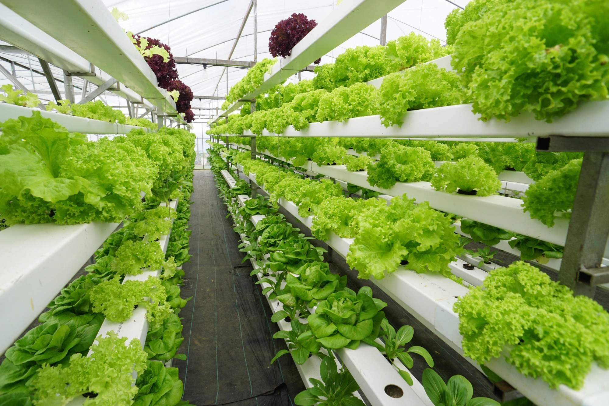 Aquaponie využívá vícestupňového pěstování, autor: Lano Lan