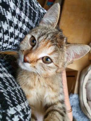 17.12.2020 - Dnes jsme přijali 4 měsíční kotě, které se zdržovalo už několik dní u obchodu v Mutěnicích. Je to kočička, dostala jméno Meduňka. Má nějaké staré zranění, které se špatně hojí, pravděpodobně se jedná o granulom, jsou nasazeny léky a je umístěna do karantény na pozorování.