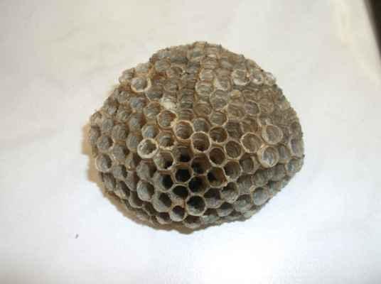 část vosího hnízda