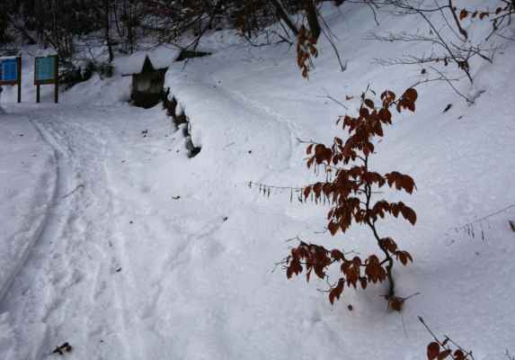 A tady také měla být odbočka vzhůru do kopce. Chvilku mi trvalo, než jsem jí v tom sněhu detekovala a další chvilku jsem se přesvědčovala, zda to vpravo je opravdu ta cesta, kterou se mám dát. Nic jiného tu ale nebylo, tak jsem šla.
