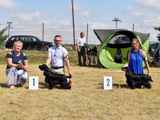 SUKY/FEMALE - TRIEDA STREDNÁ/INTERMEDIATE CLASS 7HOSHI BLUE VALLEY OF DOGS, PKR.VIII-40617, 21.02.2020  O: CLARAMAND ONCE AGAIN M: FANTAZJA BLUE VALLEY OF DOGS MAJ: BRZEZIŃSCY RENATA WALDEMAR  V 1, CAC, BOV / Exc 1, CAC, best of variety 8ISIS SIMONIDES, CLP/AC/39418, 13.08.2019  O: VIGORRUS VELVET GOLDMINE M: CASSIOPEIA SIMONIDES MAJ: OTTMÁROVÁ KATARÍNA  V 2, res. CAC / Exc 2, res. CAC