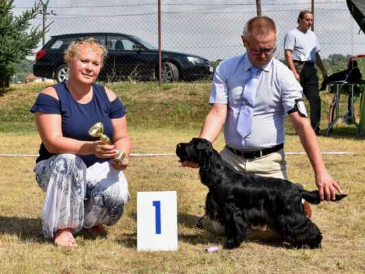 SUKY/FEMALE - TRIEDA STREDNÁ/INTERMEDIATE CLASS 7HOSHI BLUE VALLEY OF DOGS, PKR.VIII-40617, 21.02.2020  O: CLARAMAND ONCE AGAIN M: FANTAZJA BLUE VALLEY OF DOGS MAJ: BRZEZIŃSCY RENATA WALDEMAR  V 1, CAC, BOV / Exc 1, CAC, best of variety
