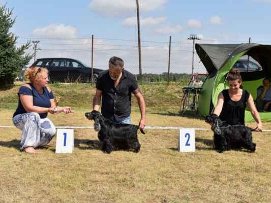 SUKY/FEMALE - TRIEDA VETERÁNOV/VETERAN CLASS 13ONCE AGAIN CHANCE BLACK PETRS, CLP/AC/34060, 21.04.2008  O: CLARAMAND HIGH FLYER M: CHANCE ON CHANGES BLACK PETRS MAJ: STUDENÍK PETR   V 1 , najkrajšia veterán sučka / Exc 1, best veteran female 12OASIS BLACK PETRS, CL/AC/36814, 12.07.2013  O: BLUE BENDER BLACK PETRS M: ONCE AGAIN CHANCE BLACK PETRS MAJ: JURÁSKOVÁ LEONA          V 2 / Exc 2