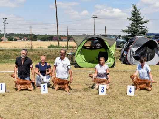 SUKY/FEMALE - TRIEDA OTVORENÁ/OPEN CLASS 48KANASTA BLACK PETRS, CLP/AC/39295, 10.05.2019  O: GENTLE GIANT BLACK PETRS M: LUCIANA BLACK PETRS MAJ: STUDENÍK PETR  V 1, CAC, BOV, Klubová víťazka, BOS / Exc 1, CAC, best of variety, Club winner, BOS 50SILVERY-SNOWBALL SWING, SPKP 2503, 11.01.2020  O: AMORE AMERICA BIG CITYLIFE M: SILVERY-SNOWBALL PRUE MAJ: LEVICKÝ PAVOL          V 2, res. CAC / Exc 2, res. CAC 47IMAGINE BLACK PETRS, CLP/AC/39102, 19.10.2018  O: VENUS BLACK PETRS M: NEEDS A CHANCE BLACK PETRS MAJ: VOTAVOVÁ JANA  V 3 / Exc 3 49LAURA Z BOJNICKÝCH ÚDOLOV, SPKP 2479, 01.05.2019  O: ORLANDO Z VEJMINKU M: GABRIELA Z BOJNICKÝCH ÚDOLOV MAJ: KUKUČKOVÁ LUCIA  VD 4 / VG 4