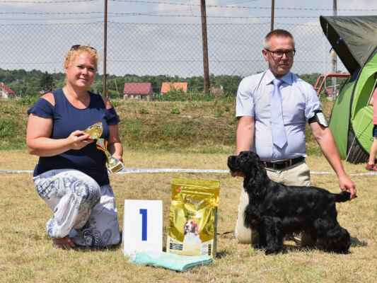 7HOSHI BLUE VALLEY OF DOGS, PKR.VIII-40617, 21.02.2020  O: CLARAMAND ONCE AGAIN M: FANTAZJA BLUE VALLEY OF DOGS MAJ: BRZEZIŃSCY RENATA WALDEMAR  V 1, CAC, BOV / Exc 1, CAC, best of variety