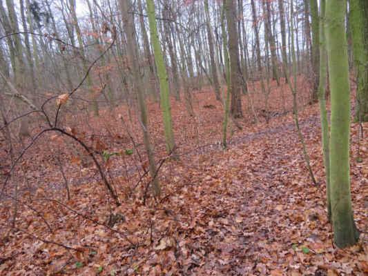 Po cestičkách zasypaných spadlým listím se dnes jede dobře.