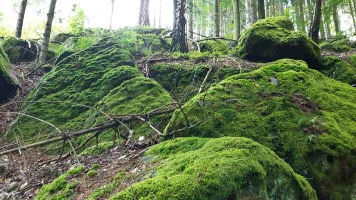 jižní svah Čížkáčů v lese - kameny porostlé mechem jako v pohádce